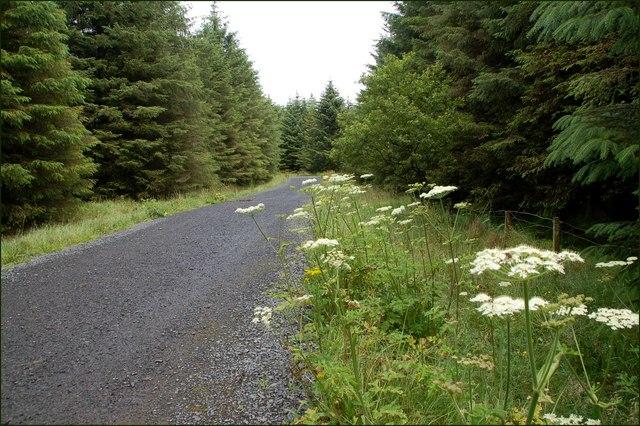 Ballyboley_forest_near_Larne_(4)_-_geograph.org.uk_-_512432
